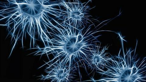 Bildergebnis für brain images