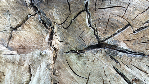 Wood Structure in Ecophysiology
