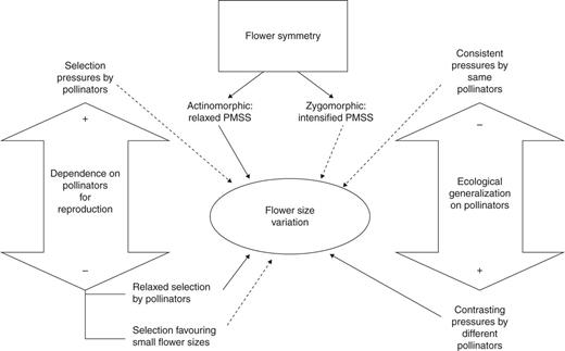 Influence of floral symmetry dependence on pollinators and conceptual diagram depicting the main relationships expected between flower size variation flower symmetry degree ccuart Image collections