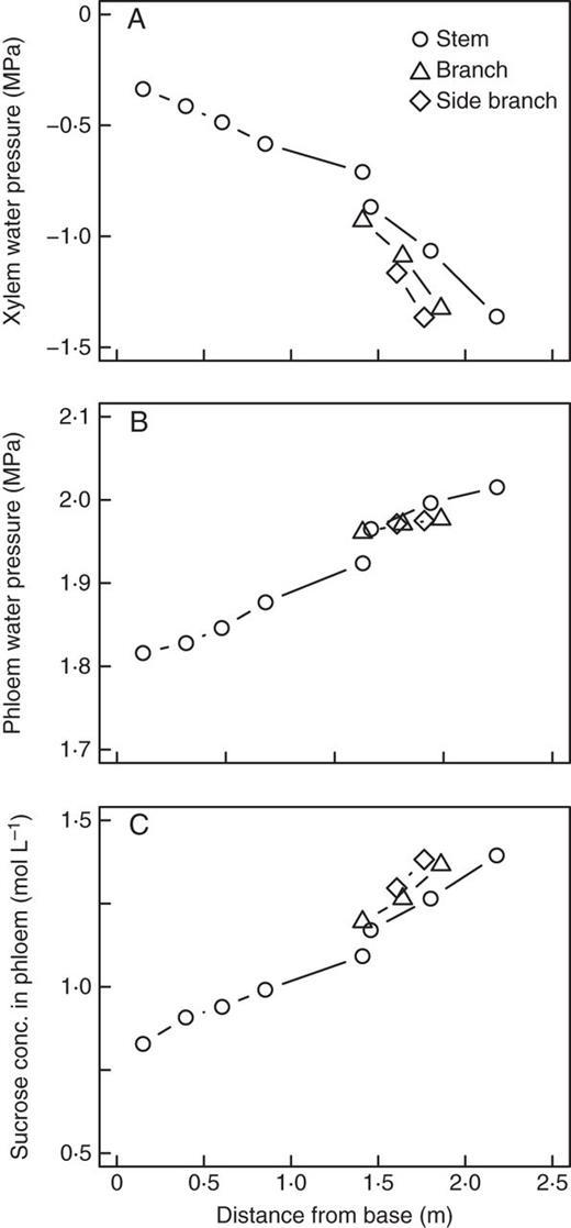 Dynamics Of Leaf Gas Exchange Xylem And Phloem Transport Water