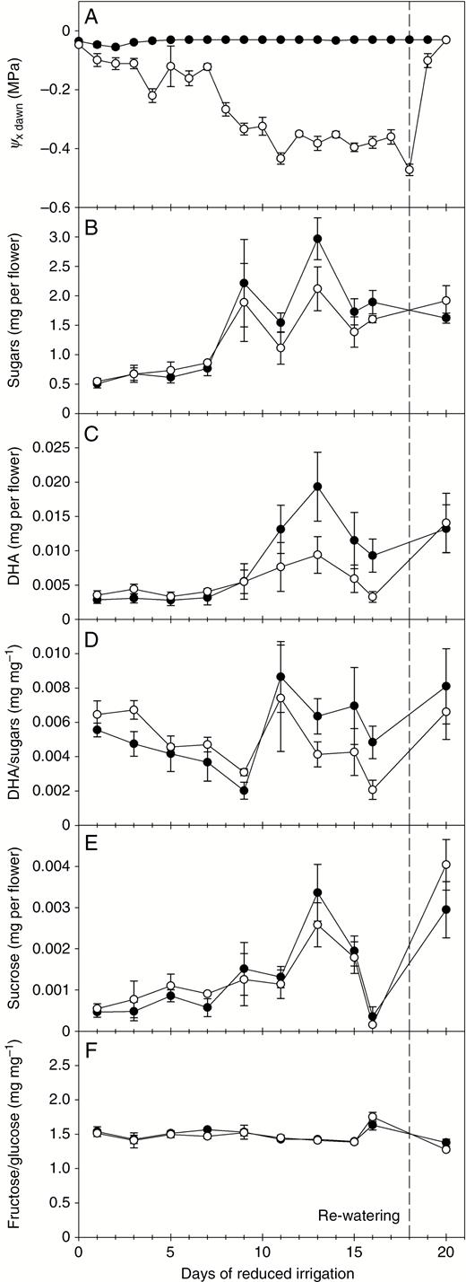 Influence Of Genotype Floral Stage And Water Stress On Floral