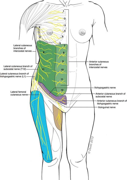 Abdominoplasty Related Nerve Injuries Systematic Review And