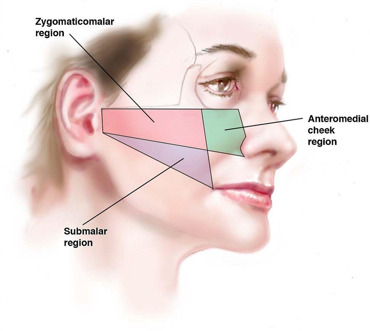 Attractive Anatomy Of Cheek Frieze - Human Anatomy Images ...