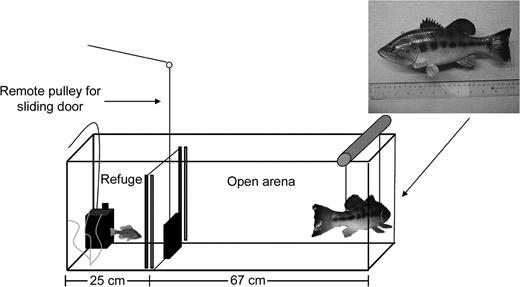 Boldness And Behavioral Syndromes In The Bluegill Sunfish Lepomis