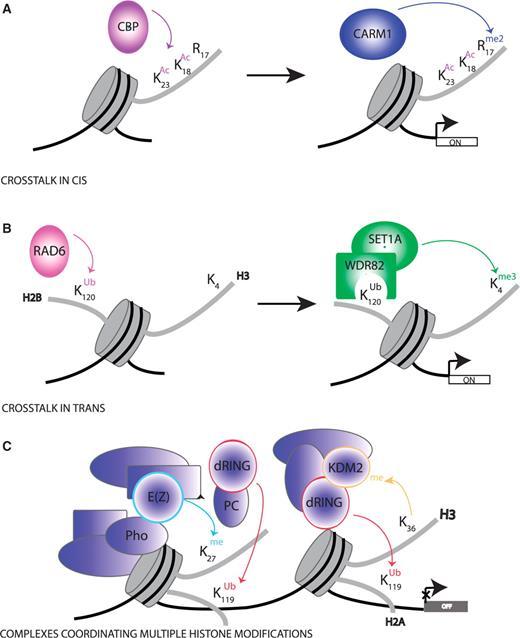 Mechanisms Of Cross-talk Between Histone Modifications. (A
