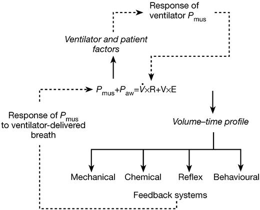 patient ventilator interaction bja british journal of anaesthesia