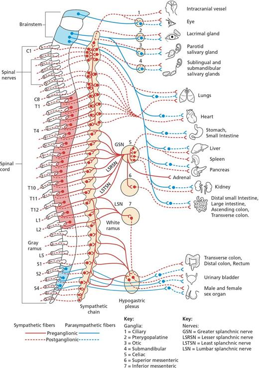 Autonomic nervous system: anatomy, physiology, and relevance in ...