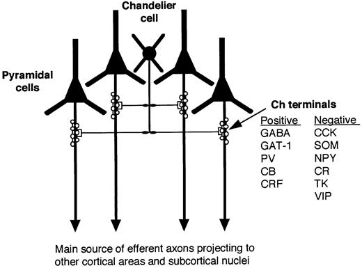 Chandelier cells and epilepsy brain oxford academic schematic diagram illustrating chemical characteristics and synaptic connections of chandelier cells with pyramidal cells the aloadofball Choice Image