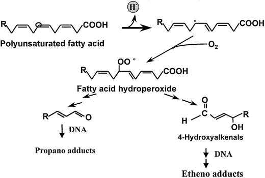 Dietary Polyunsaturated Fatty Acids And Cancers Of The Breast And