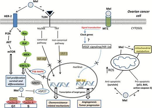 PPT - Positive and Negative Regulators of Metastasis