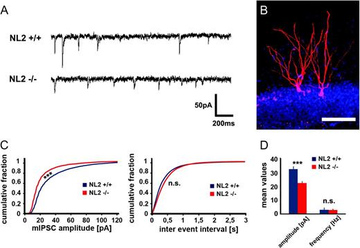 Increased Dentate Gyrus Excitability in Neuroligin-2-Deficient Mice ...