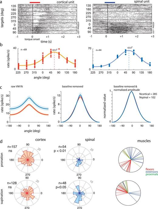Descending Systems Translate Transient Cortical Commands Into A