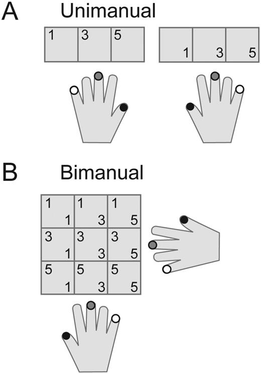 Two Distinct Ipsilateral Cortical Representations for Individuated ...
