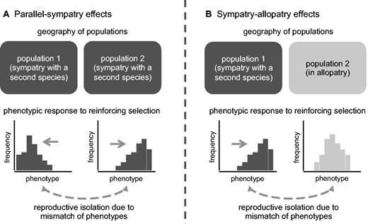 Reinforcements Incidental Effects On Reproductive Isolation Between