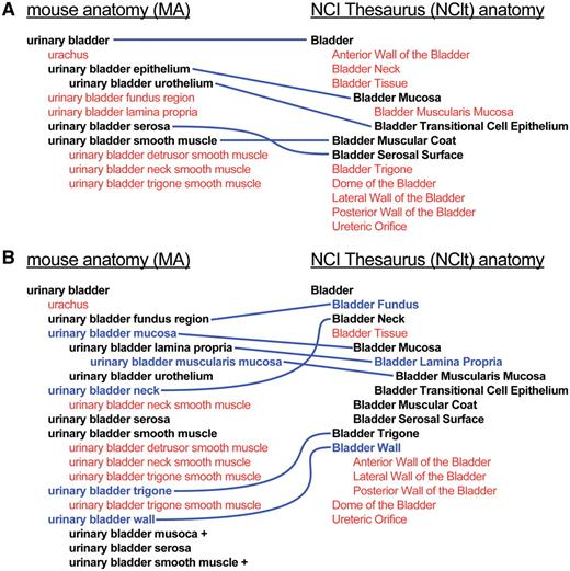 mouse–human anatomy ontology mapping project | Database | Oxford ...