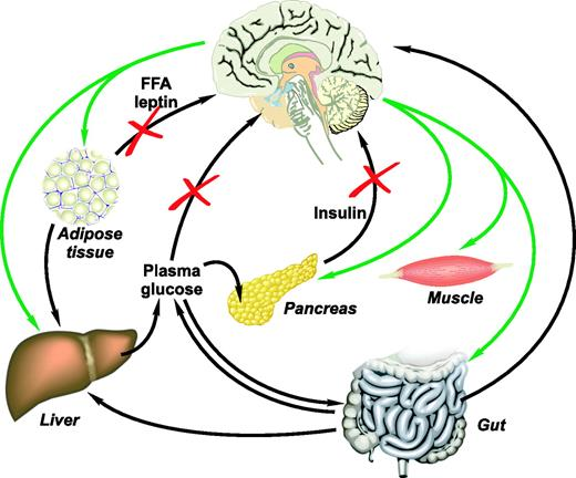 Minireview the brain as a molecular target for diabetic therapy model of neural control of glucose homeostasis the brain senses circulating nutrients glucose ccuart Choice Image
