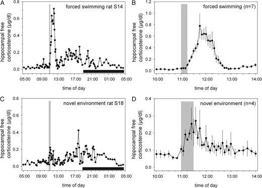 Corticosterone Levels in the Brain Show a Distinct Ultradian