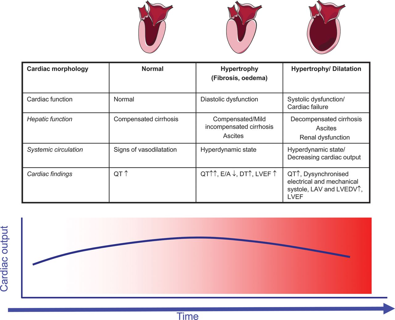Interactions Of The Heart And The Liver European Heart Journal