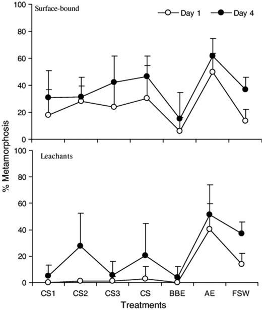 Relevance of biofilm bacteria in modulating the larval metamorphosis ...