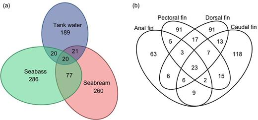 High Diversity Of Skin Associated Bacterial Communities Of Marine