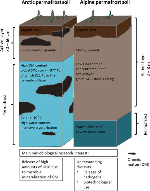 Alpine soil microbial ecology in a changing world | FEMS ...