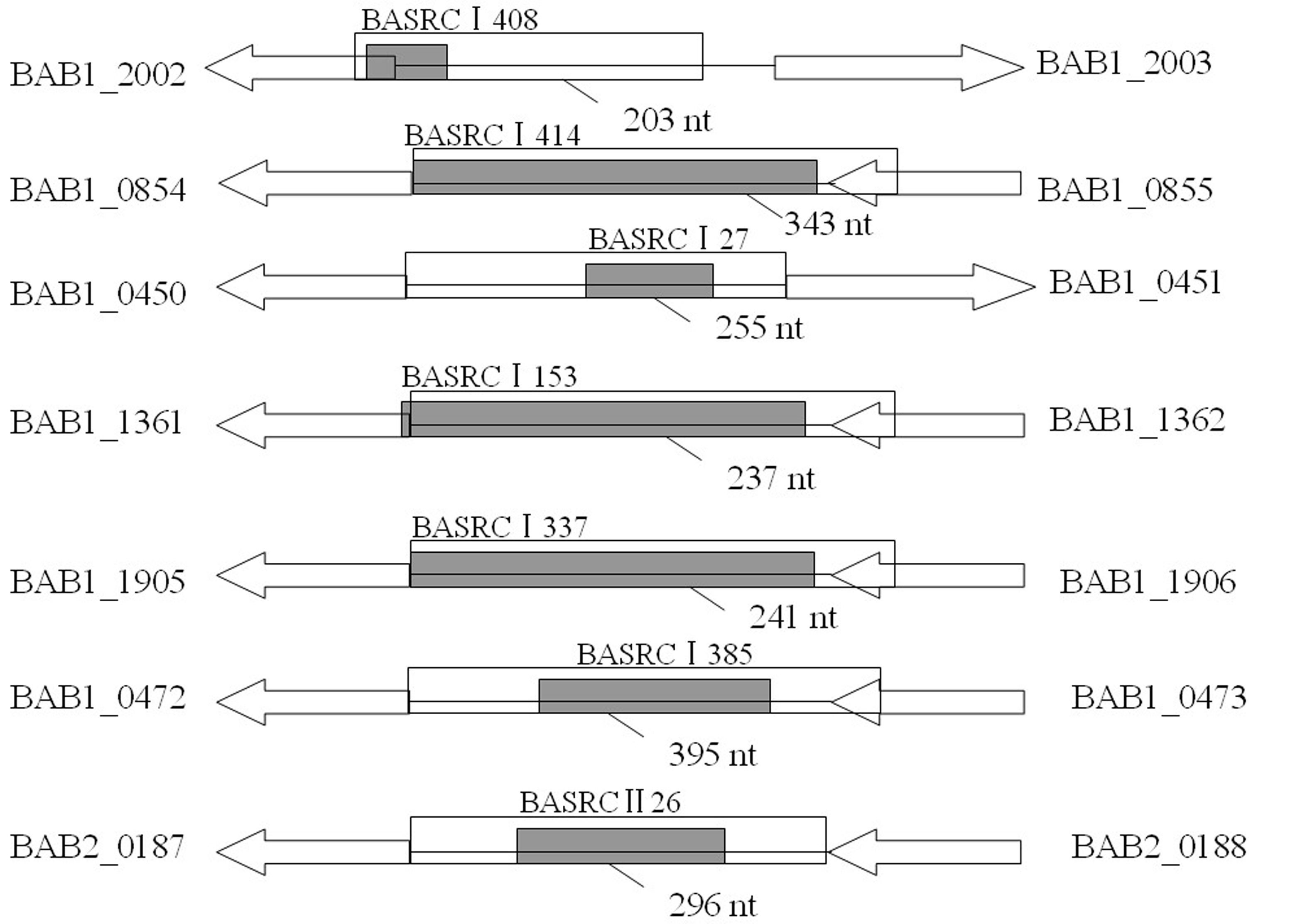 s1 the schemes of cloning of putative target sequences of verified srnas into pmr lacz plasmid