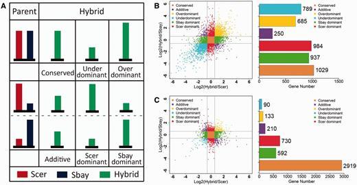 Evolution Of Gene Regulation During Transcription And Translation