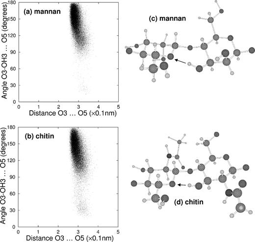 Predicting The Molecular Shape Of Polysaccharides From Dynamic