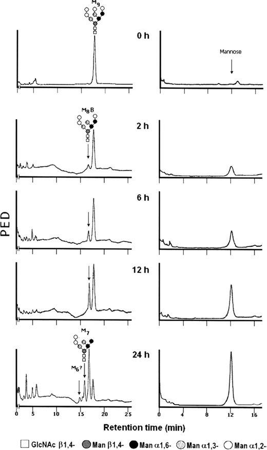 Hydrolysis Of Man9glcnac2 And Man8glcnac2 Oligosaccharides By A
