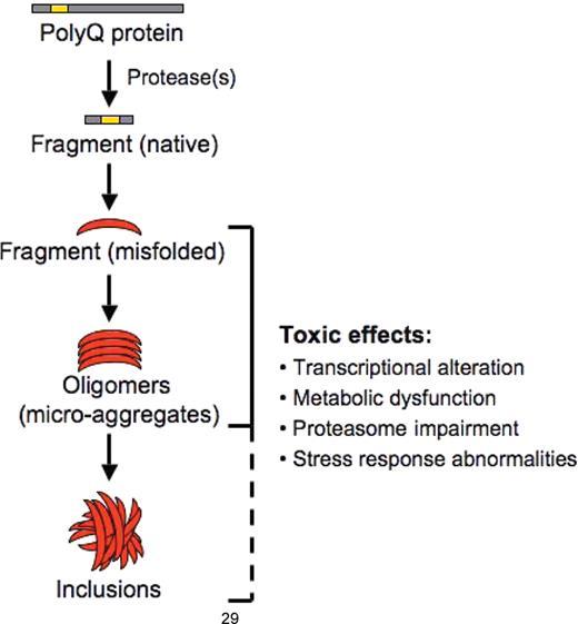Polyglutamine Diseases Emerging Concepts In Pathogenesis And