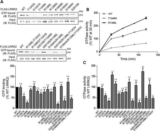 GTPase activity of LRRK2 GTPase domain mutants. (A) GTP