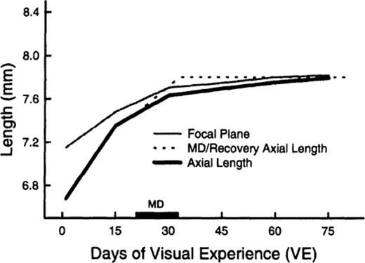 Animal Models Of Myopia Learning How Vision Controls The Size Of