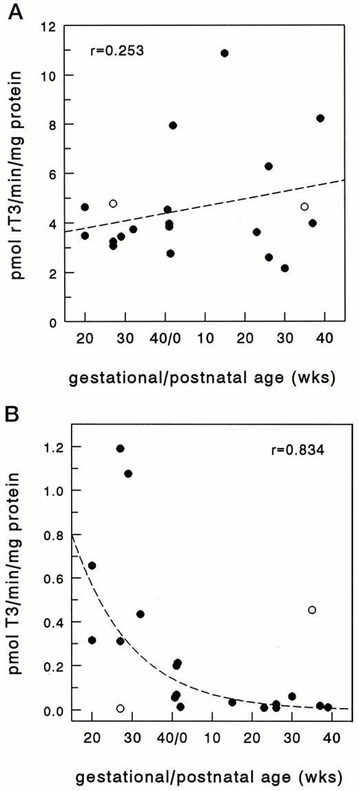 Ontogeny Of Iodothyronine Deiodinases In Human Liver1 The Journal