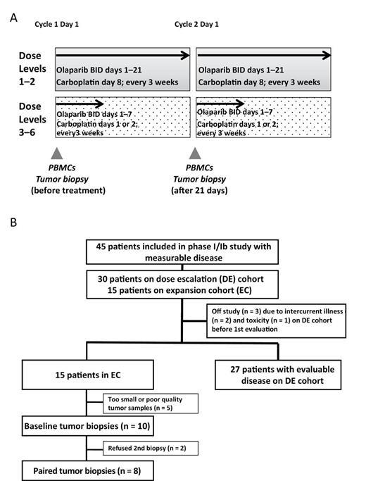 Phase Iib Study Of Olaparib And Carboplatin In Brca1 Or Brca2
