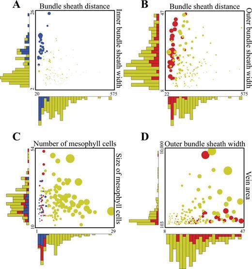Deconstructing Kranz anatomy to understand C4 evolution   Journal of ...