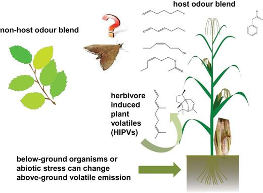 Interplay Between Insects And Plants Dynamic And Complex