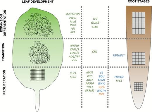 Plants Grow With A Little Help From Their Organelle Friends