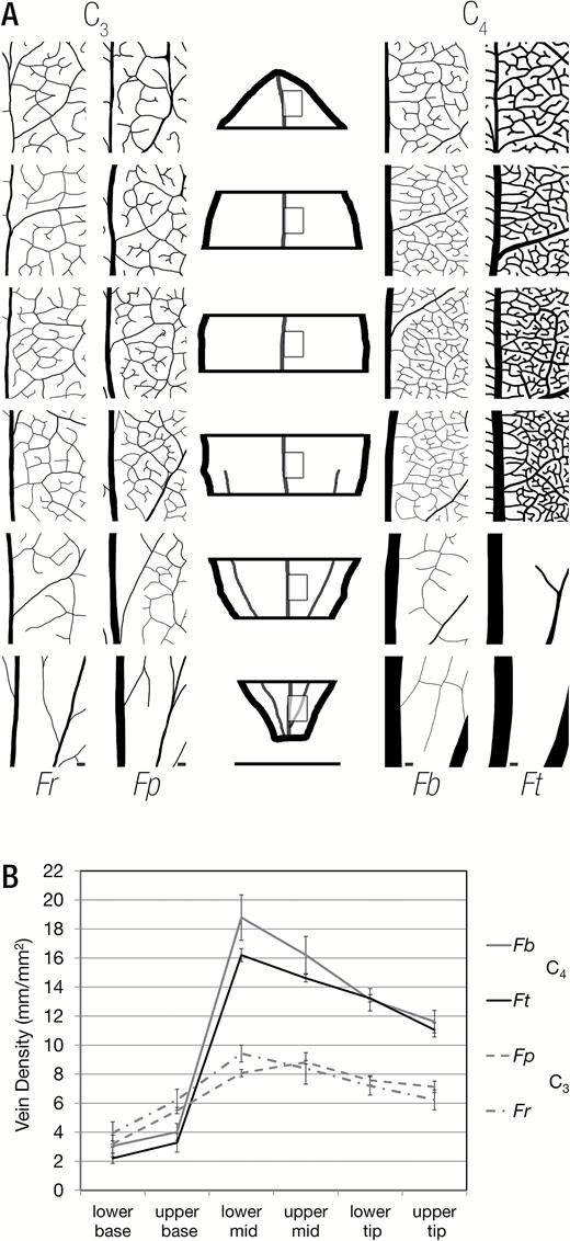 Shared characteristics underpinning C4 leaf maturation derived from ...