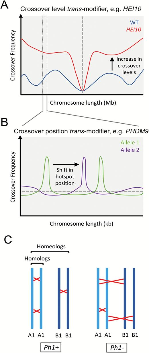 Modification of meiotic recombination by natural variation in plants trans modification of meiotic recombination a elevated crossover frequency observed on the scale ccuart Image collections
