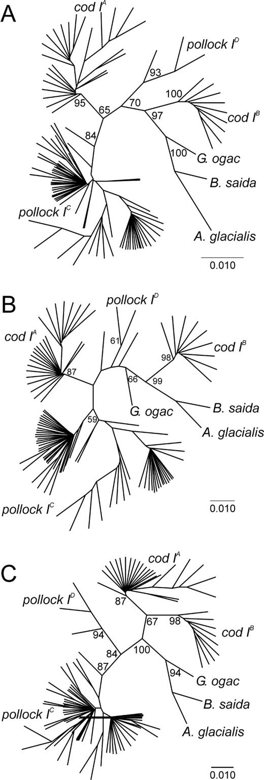 Evidence For Positive Selection At The Pantophysin Pan I Locus In Polar 4 Stroke Engine Diagram Neighbor Joining Phylogenies Of Kimura Two Parameter Distances From Different Regions Walleye Pollock
