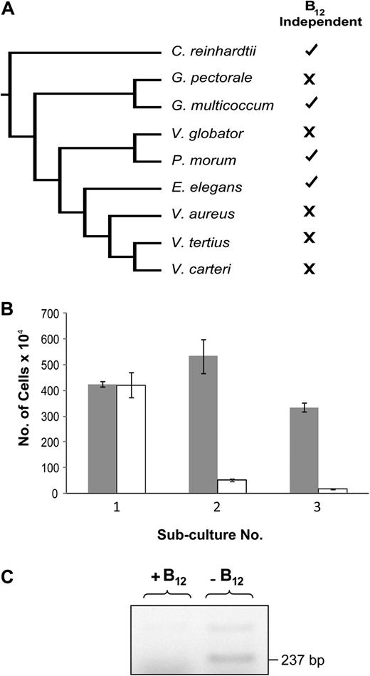 Insights into the evolution of vitamin b12 auxotrophy from sequenced b12 requirements in the volvocales a schematic tree displaying phylogenetic relationships between volvocalean species ccuart Image collections
