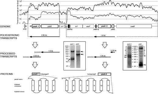 Split Photosystem Protein Linear Mapping Topology And Growth Of