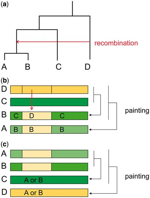 Efficient Inference Of Recombination Hot Regions In Bacterial
