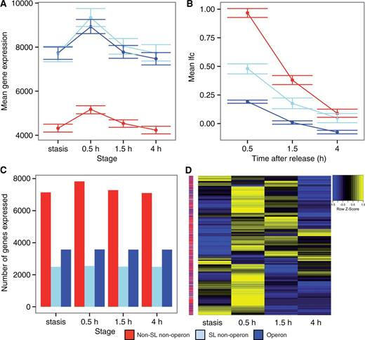 Trans Splicing And Operons In Metazoans Translational Control In