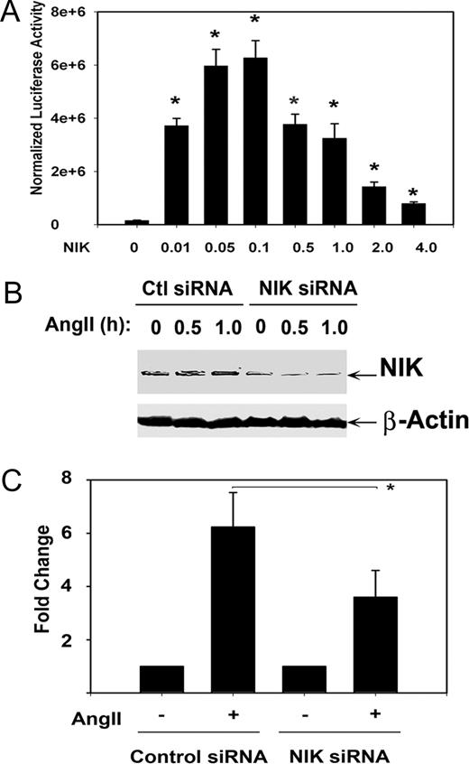 NIK Requirement for Ang II-Induced Transcriptional
