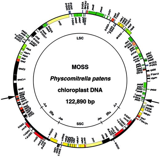 Complete chloroplast dna sequence of the moss physcomitrella patens figure 1 gene map of the moss ptens chloroplast genome ir sequences ccuart Image collections
