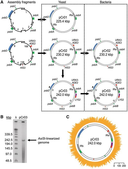 Exogenous chloroplast genome for complex sequence manipulation in cloning of the c reinhardtii chloroplast genome a flow diagram of genome ccuart Image collections