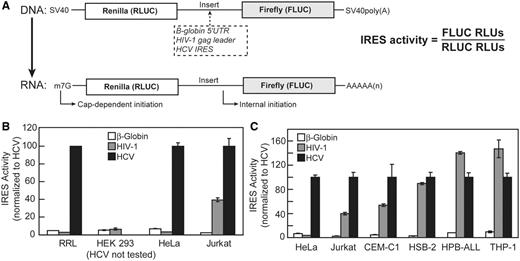 Internal translation initiation from the HIV-1 gag 5