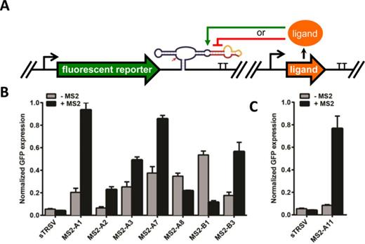 Protein Responsive Ribozyme Switches In Eukaryotic Cells Nucleic