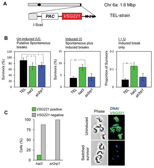 Locus Specific Control Of Dna Resection And Suppression Of